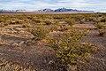 East bajada of the Doña Ana Mountains - Flickr - aspidoscelis.jpg