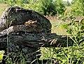Eastern Chipmunk Tamias striatus 2.jpg