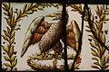 Ecouen Musée national de la Renaissance7202.JPG