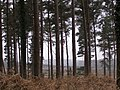 Edge of the trees, Pitts Wood Inclosure, New Forest - geograph.org.uk - 375973.jpg