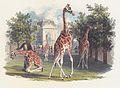 Eduard Gurk - Die erste Giraffe im Schönbrunner Tiergarten - 1828.jpeg