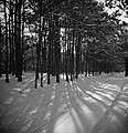 Een bos in de sneeuw bij ochtendzon, Bestanddeelnr 255-8820.jpg