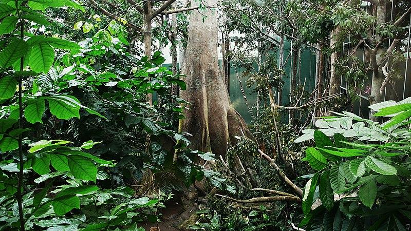 El bosque inundado amazonico-cosmocaixa-2009 (2).JPG