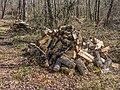 Elburgo - Leña en el bosque 01.jpg