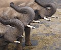 Elefanten Zoo Leipzig.jpg