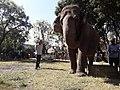 Elephant20171111 122108.jpg