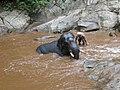Elephant river bath.jpg