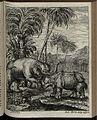 Elephantographia Curiosa 187.jpg