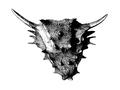 Elginia mirabilis skull 1893.png