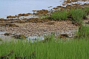 Elizabeth A. Morton National Wildlife Refuge, NY. Credit- USFWS (11820023124).jpg
