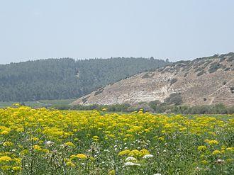 Valley of Elah - Elah Valley, spring of 2010