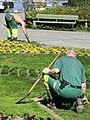 Enge - Neuanpflanzungen durch Mitarbeiter von 'Grün Stadt Zürich' 2012-03-28 15-12-14 (P7000).JPG