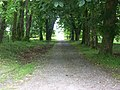 Entrance driveway into Tighnabruaich Cemetery - geograph.org.uk - 22823.jpg