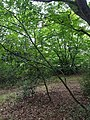 Epping Forest 20170727 112916 (49374810932).jpg