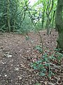 Epping Forest 20170727 112942 (49374147818).jpg
