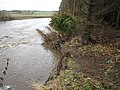 Erosion on the East Bank of the River Wear - geograph.org.uk - 1574417.jpg