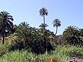 Exuberancia norteafricana de Canarias - panoramio.jpg