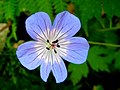 FOREST FLOWER.jpg
