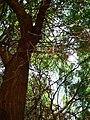 Fale - Giardini Botanici Hanbury in Ventimiglia - 481.jpg