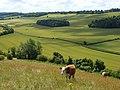 Farmland, Radnage - geograph.org.uk - 892068.jpg
