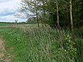 Farmland and trees near Osbaston - geograph.org.uk - 1319580.jpg