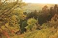 Feldahorn vor Kiefernwald im Naturschutzgebiet Gültlinger und Holzbronner Heiden.jpg