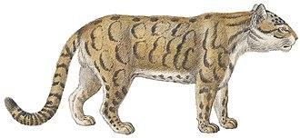 Panthera - 70 px