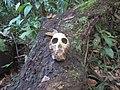 Fetherston Natural World - Eamonn Fetherston (41676773252).jpg