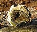 Feuerstein mit Loch-Huehnergott.jpg