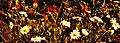 Field of Flowers (180591885).jpg