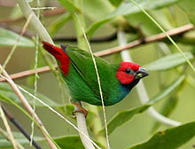 perched green bird with red head and rump