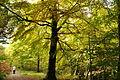 Fingle Woods (6262).jpg