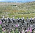 Fireweed and dry stone wall - panoramio.jpg