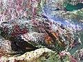 Fish (87297307).jpg