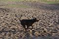 Flickr - Laenulfean - running dog.jpg
