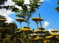 Flickr - Per Ola Wiberg ~ mostly away - in september days.jpg