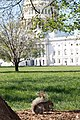 Flickr - USCapitol - Squirrel on Capitol Square (1).jpg