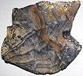 Flint (Vanport Flint, Middle Pennsylvanian; Nethers Flint Quarries, Flint Ridge, Ohio, USA) 217.jpg
