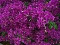 Flor no Parque das Nações.jpg