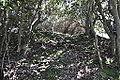 Flora del bosque relicto Cerro Santa Inés 05.JPG