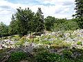 Flore des Alpes orientales-Jardin d'altitude du Haut-Chitelet.jpg