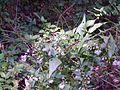 Flores brancas de mato 2.jpg