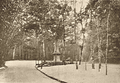 Floresta da Tijuca 1928.png