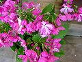 Flower-center130551.jpg