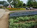 Flower-center133539.jpg