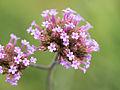 Flower (14931116111).jpg