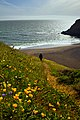 Flowers, Waves, & Joy (14140274778).jpg