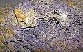 Fluoritized fossiliferous limestone (Mississippian; Hastie Quarry, near Cave-in-Rock, Illinois, USA) 6 (26294863945).jpg