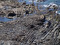 Folding on the foreshore - geograph.org.uk - 501109.jpg