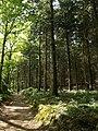Footpath, Rora Wood - geograph.org.uk - 1302145.jpg